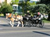 конный экипаж