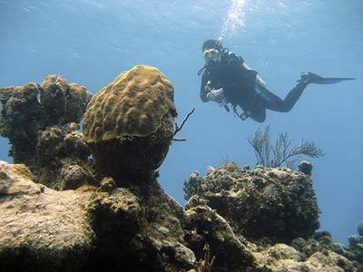 Дайвинг в Тихом океане